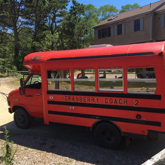 Cranberry Bog Tours (Harwich, MA): Top Tips Before You Go