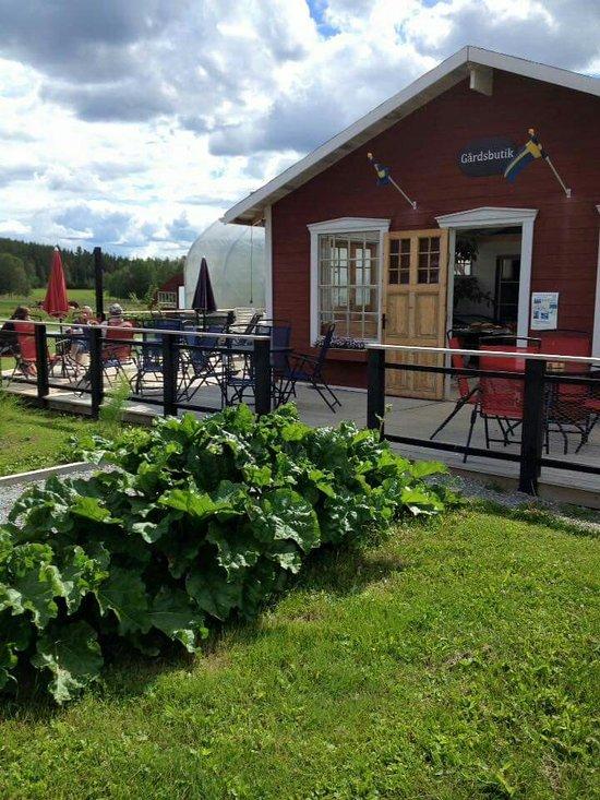 Junsele Karta Sverige.Turism I Junsele 2019 Junsele Fakta Tripadvisor