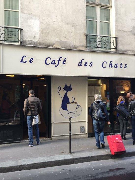 Cafe Des Chats Paris Numero Telephone