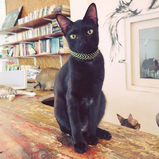 The Odd Cat Cafe Kerobokan Jl Raya Semer No 60 Menu