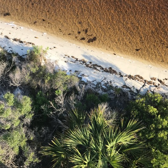 Perdido Key Restaurants: Big Lagoon State Park (Perdido Key, FL): Top Tips Before