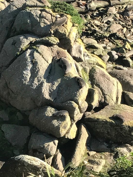 seals on rocks.... only picture... everything else is vid so you can detect movement