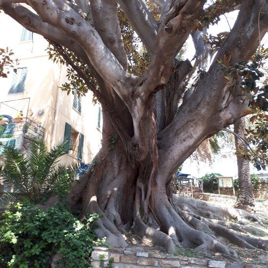 Giardini Villa Ormond Sanremo