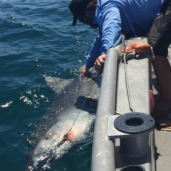 Sanibel offshore fishing charters fort myers fl top for Deep sea fishing fort myers florida