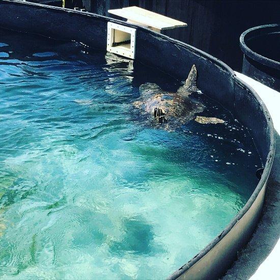 Sea Turtle Rescue Centre - Glyfada - Ce quil faut savoir ...