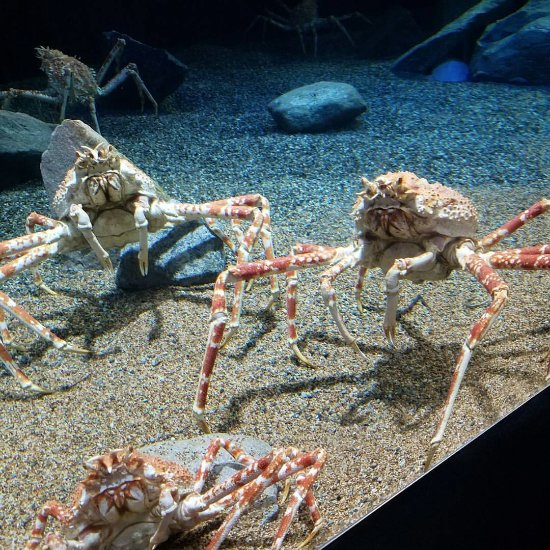 Mystic aquarium ct top tips before you go tripadvisor for Go fish mystic