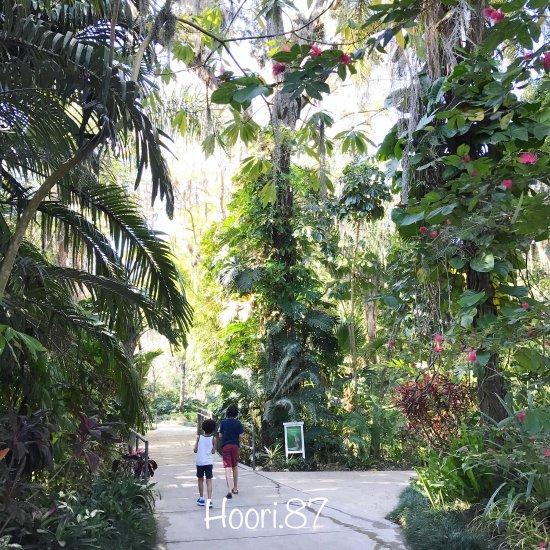Hotels Near Leu Gardens Orlando Fl