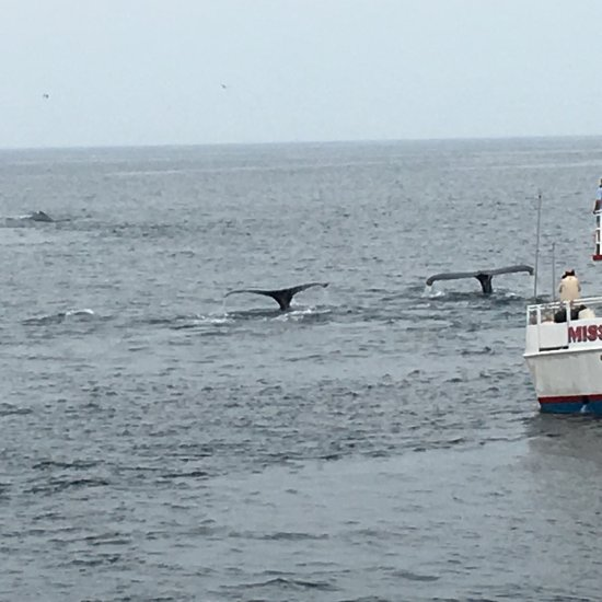 Hyannis Whale Watcher Cruises (Barnstable, MA): Top Tips