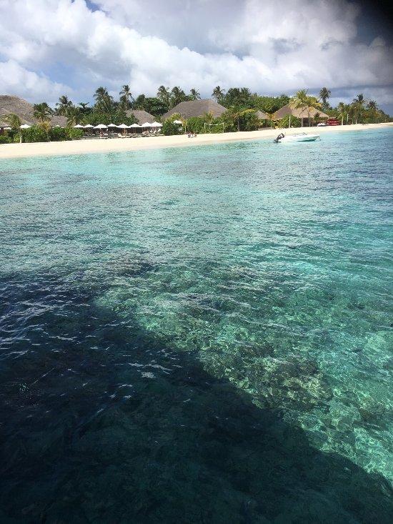 πάρα πολλά ψάρια στη θάλασσα dating ιστοσελίδα Μη αποκλειστικοί κανόνες γνωριμιών