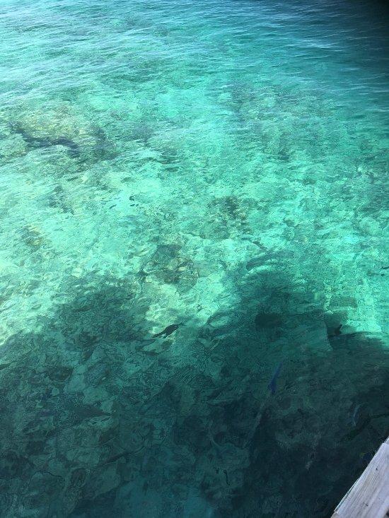 Dating εφαρμογές πάρα πολλά ψάρια στη θάλασσαDating στο Τσεννάι με αριθμό κινητού τηλεφώνου