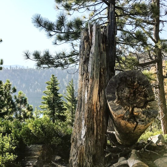 Lake Tahoe Vacation Rentals On The Water: Cascade Falls Trail (Lake Tahoe (Nevada)): Top Tips Before