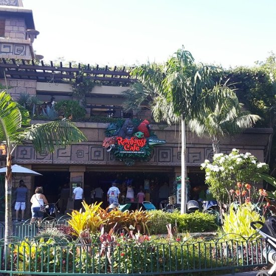 Rainforest Cafe Anaheim Disneyland