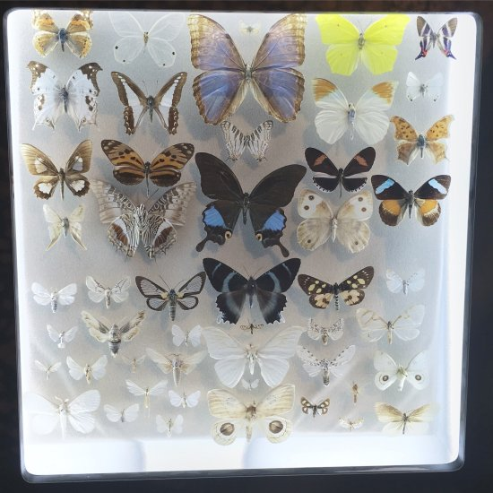 Audubon Butterfly Garden And Insectarium New Orleans La