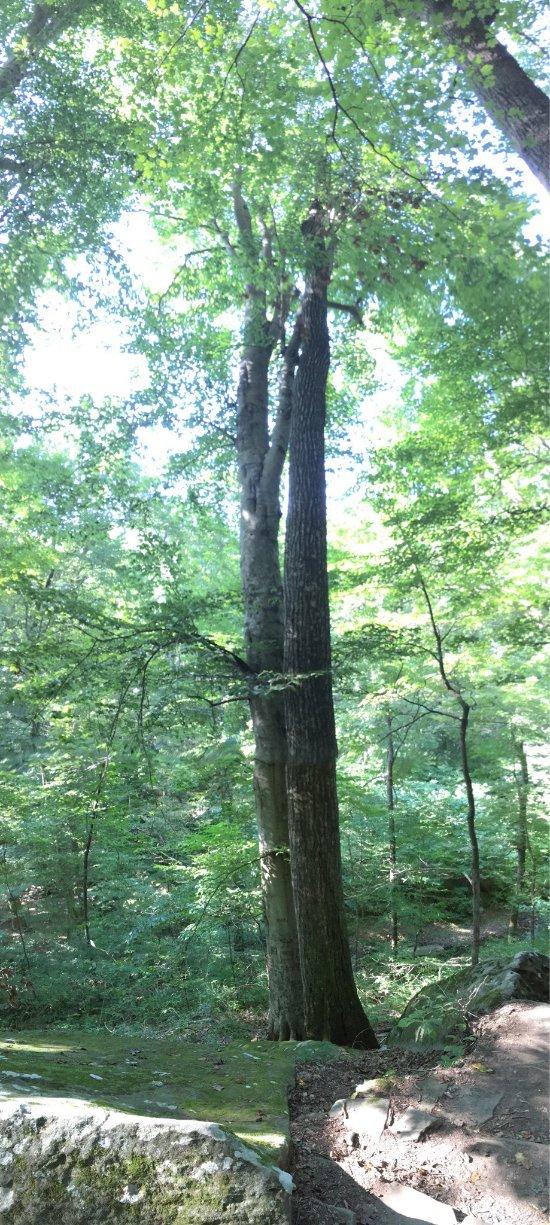Pine tree willowbrook reviews