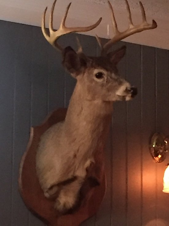 Antlers ithaca ny coupons
