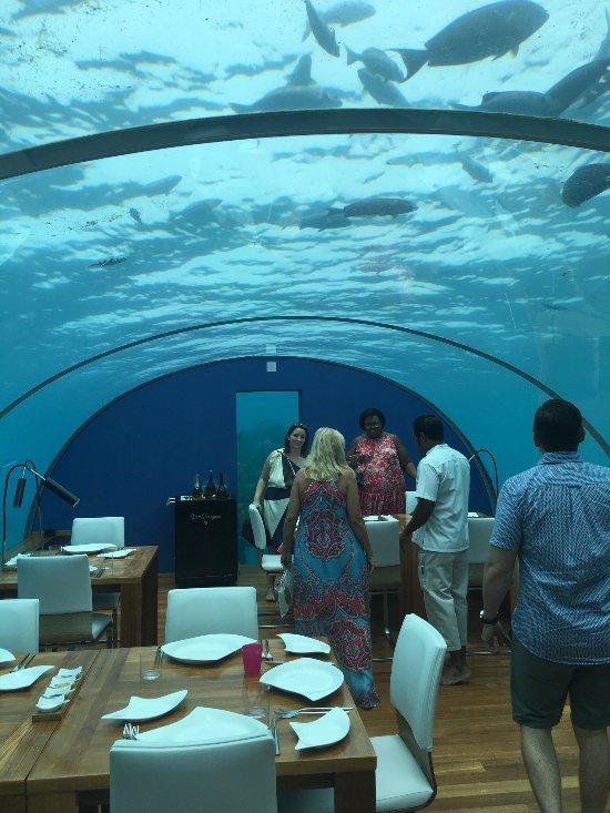 Ithaa undersea restaurant rangali island restaurant for Ithaa prices