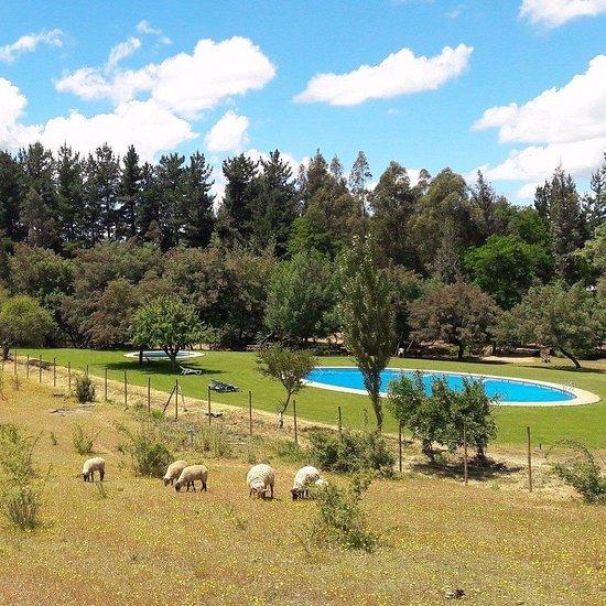 Quillon 2020 Best Of Quillon Chile Tourism Tripadvisor