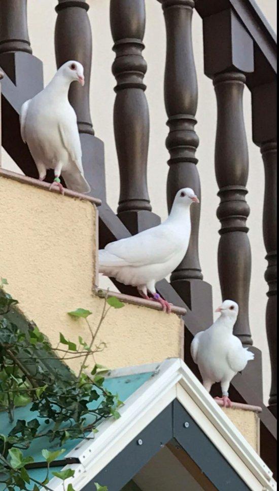 Hotel pigeon blanc forbach frankrike omd men for Food and bar jine forbach
