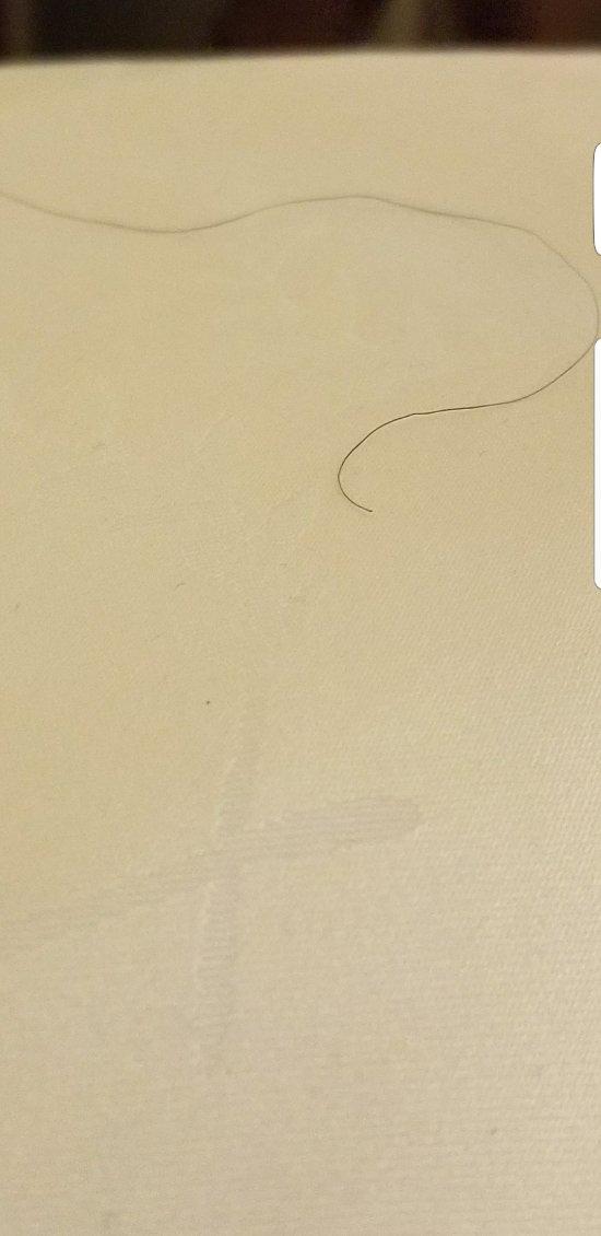Sailfish Myrtle Beach Reviews