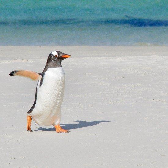 CARCASS ISLAND LODGE - Updated 2019 Reviews (Falkland Islands