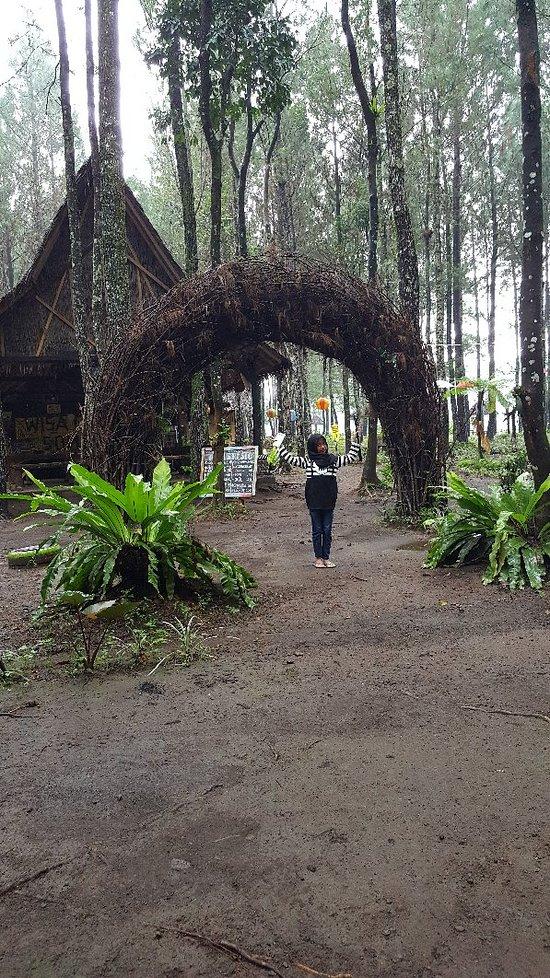 Wisata Pinus Songgon Lodge Reviews Banyuwangi Indonesia