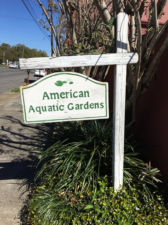 American Aquatic Gardens And Gifts New Orleans 2020 All You