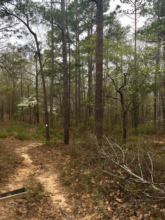 Things To Do in Tuskegee National Forest, Restaurants in Tuskegee National Forest
