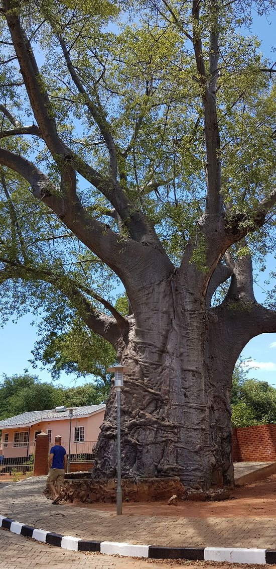 Boab Prison Tree, Kasane
