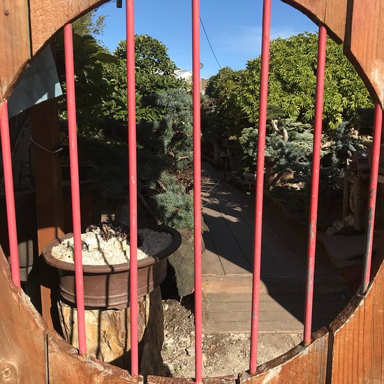 Maribyrnong Victoria: Sweet Grass Bonsai Nursery Cafe, Footscray