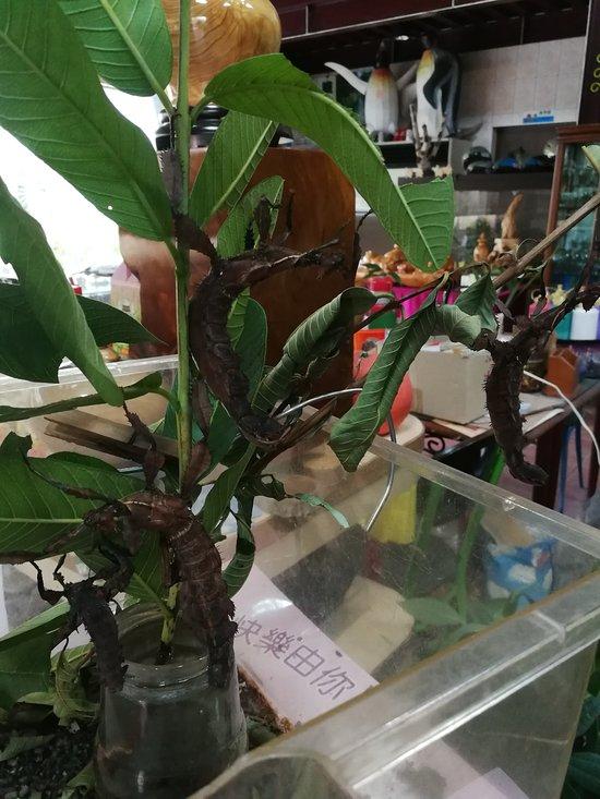 Phoenix Beetle Ecology Homestay
