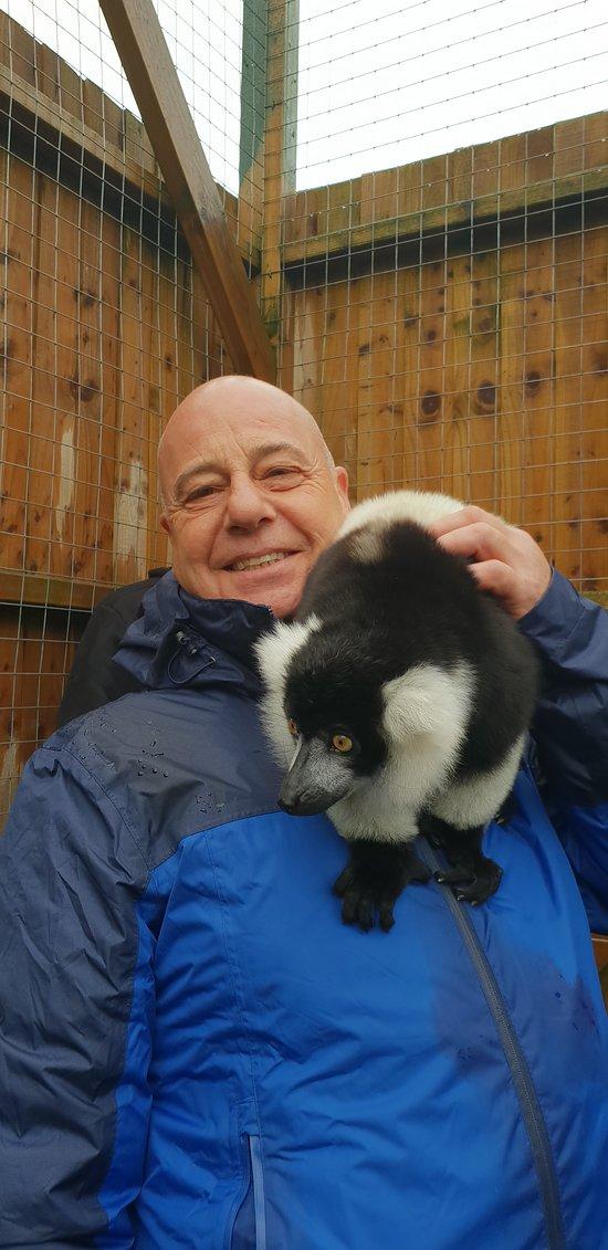 Meerkat Lemur and Serval Experience
