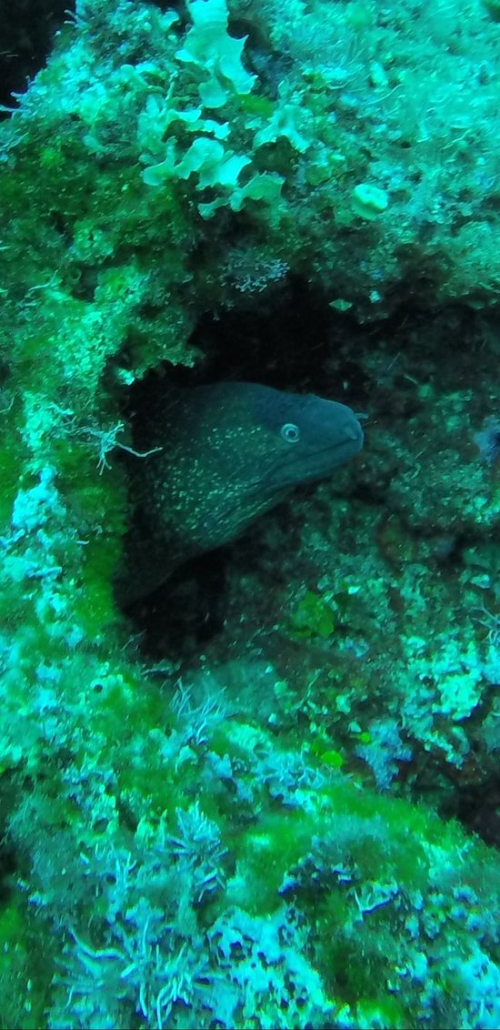 Blu infinito diving center san teodoro 2019 all you need to know before you go with photos - Dive center blu ...