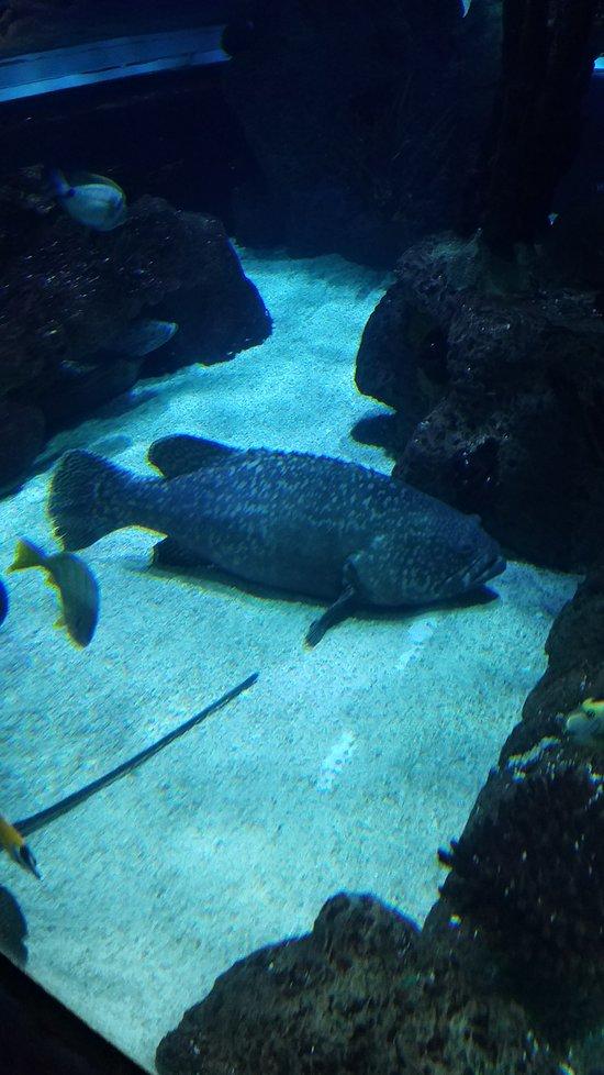 Aquarium Restaurant, Nashville - Menu, Prices & Restaurant ...