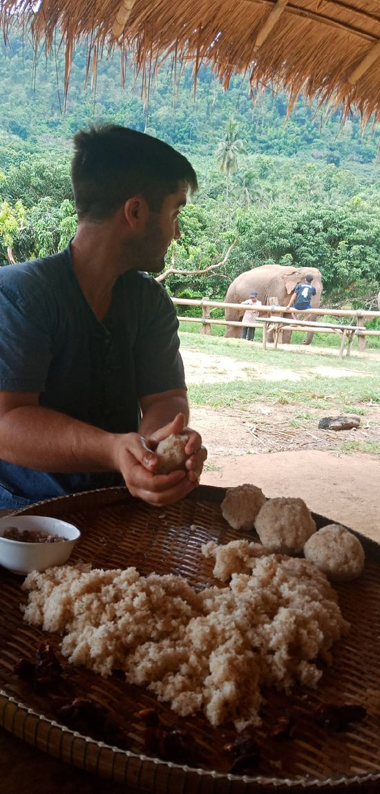 Prepare food for elephants.