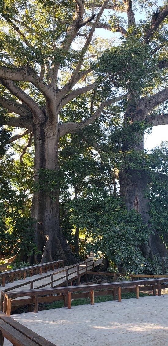 Jamaica Giants Nature Tour and Sculpture Garden