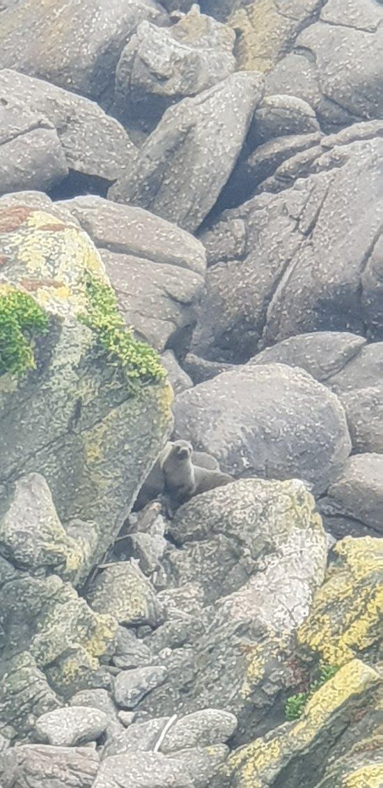 Carter's Beach (Port Mouton)