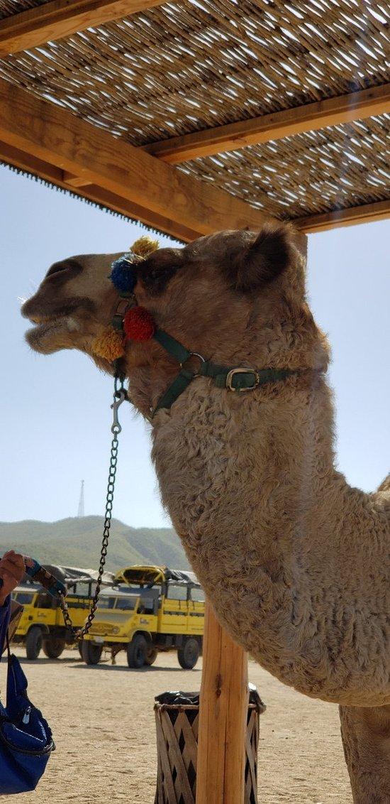 Visita a camello