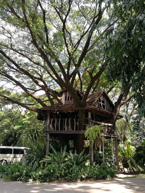 tree house hotel prices reviews sisaket thailand tripadvisor rh tripadvisor com