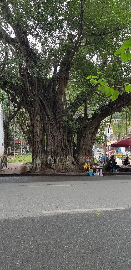 Beautiful and Busy Hanoi