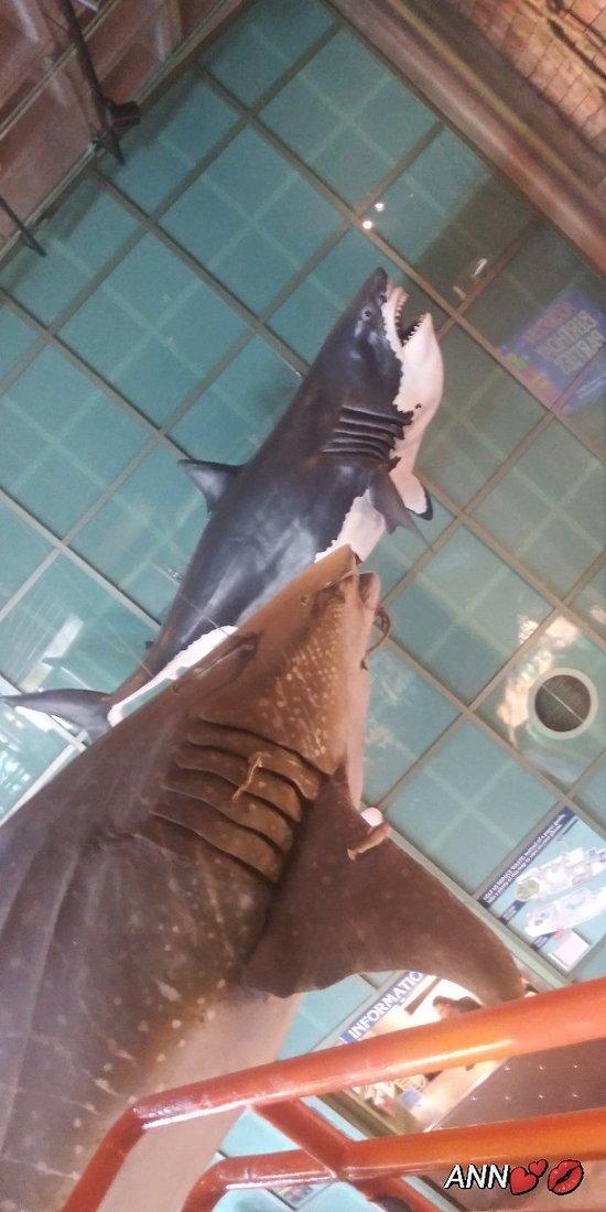 Very huge Aquarium.