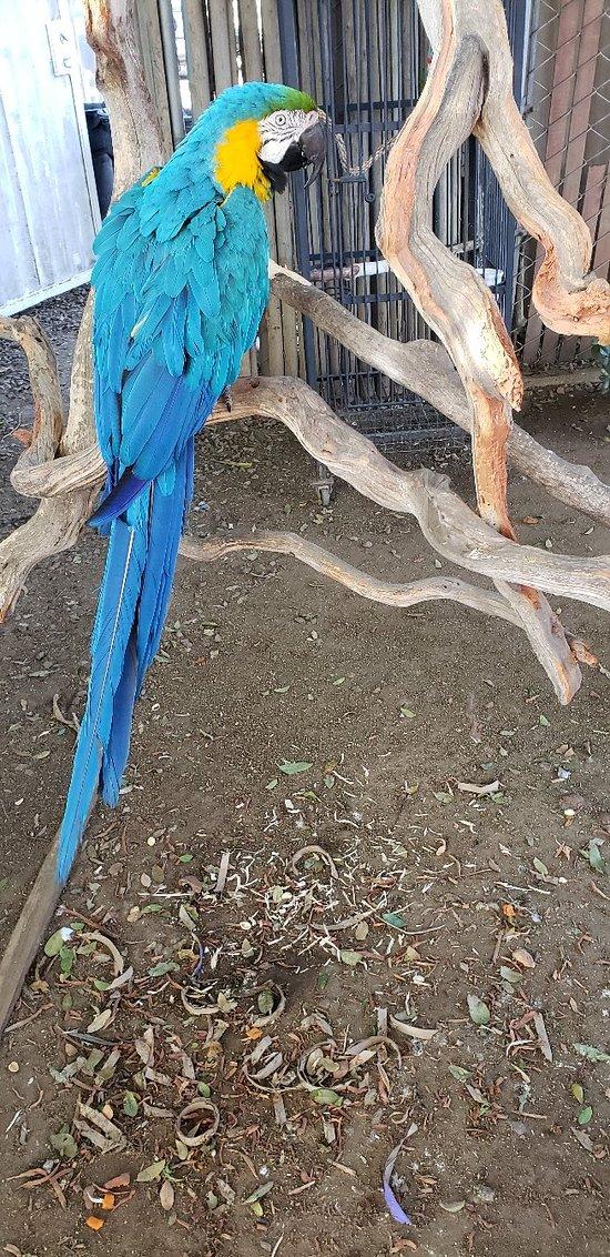 Free Flight Birds