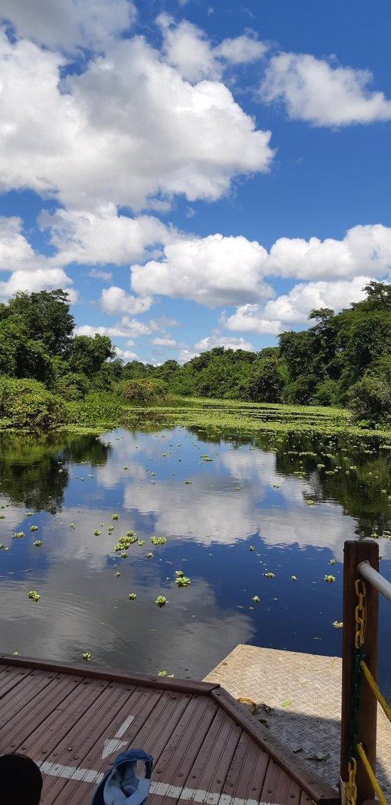 Carnaval no Pantanal