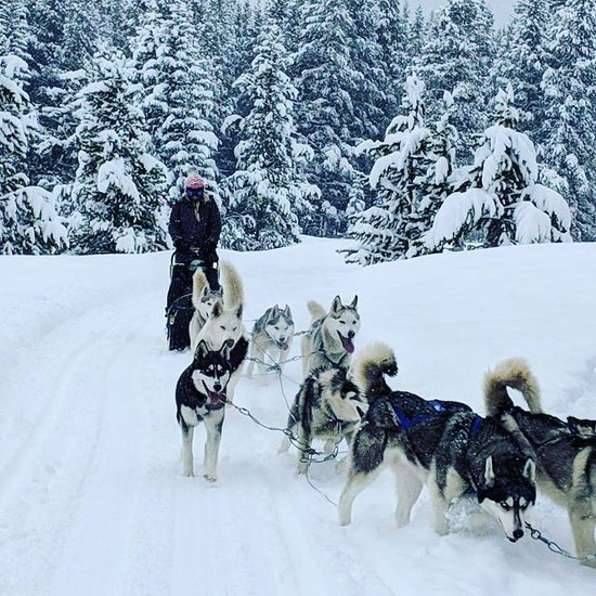 snow caps sled dogs