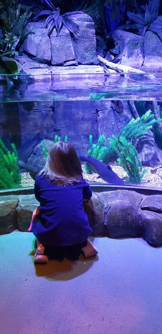 SEA LIFE Charlotte-Concord Aquarium - 2019 All You Need to ...