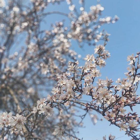 Badamwari Garden (Srinagar) - 2020 All You Need to Know BEFORE You ...