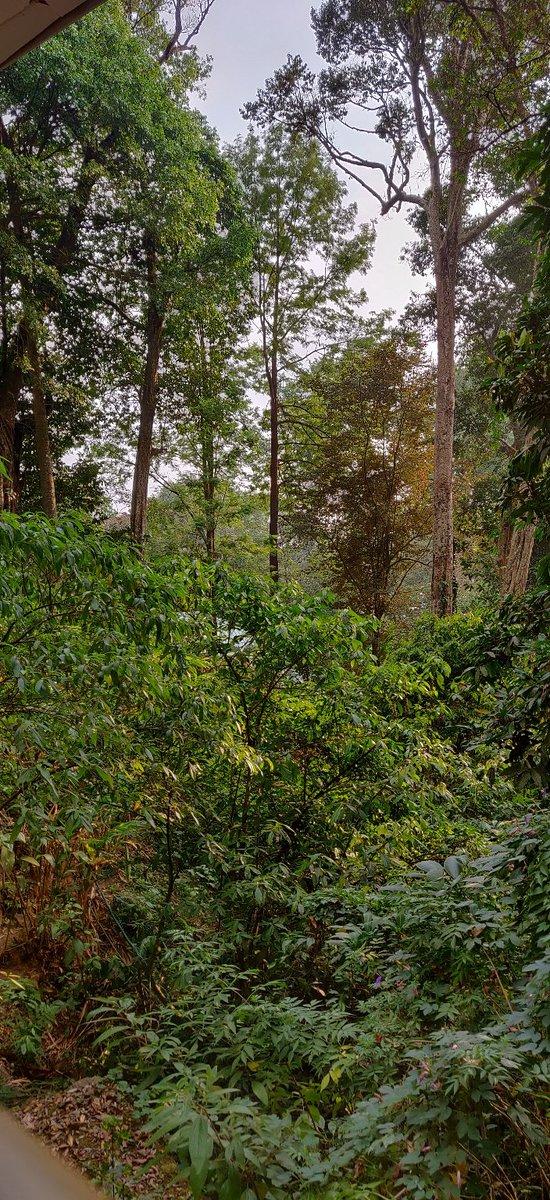The Tall Trees Munnar