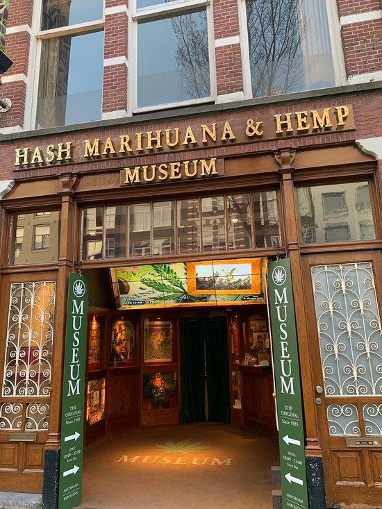 Музей в амстердаме конопли конопля ловля карпа