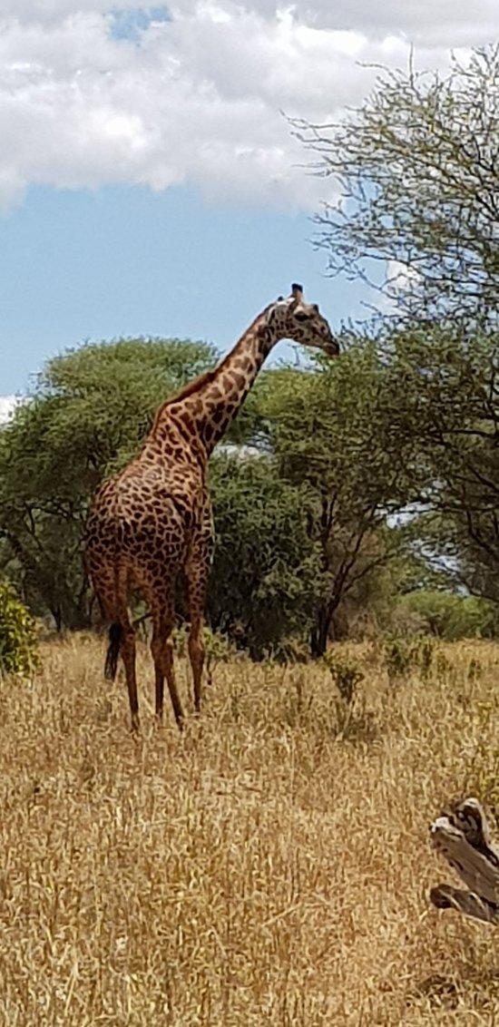Safari inolvidable