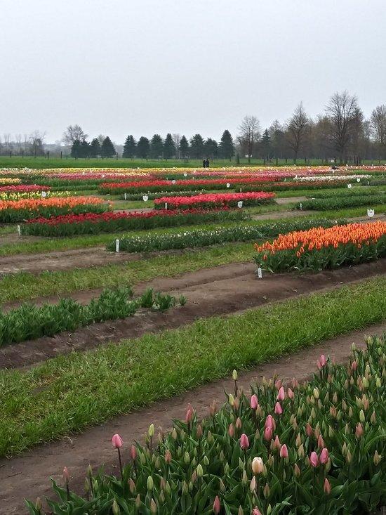 Hollandia: Mi a holland gazdaság titka?