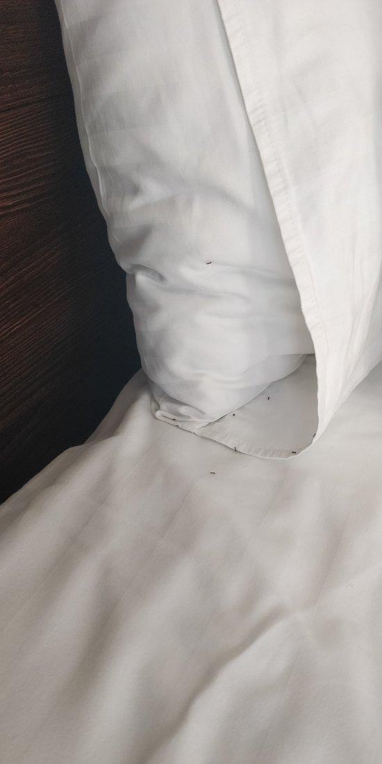 Муравьи в постели